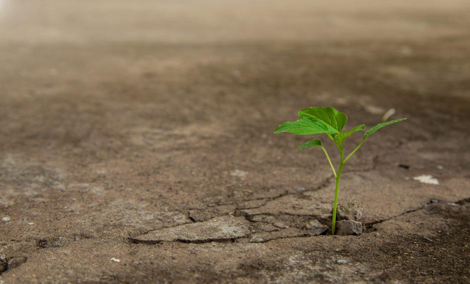 Renta Variable, Largo Plazo: Estrategias en Fondos de Inversión
